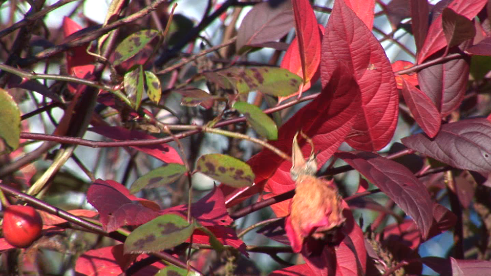 6 Plants For Late Fall And Early Winter Interest In The